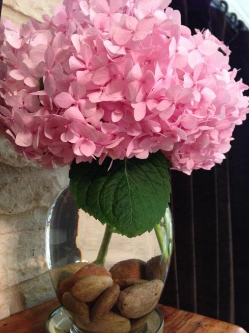 fresh pink hydrangeas